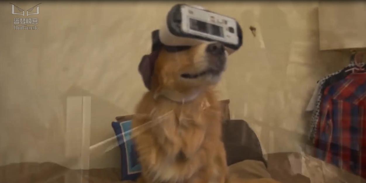 主人给狗体验VR,汪:我是谁?我在哪?
